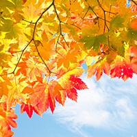 秋の一人旅