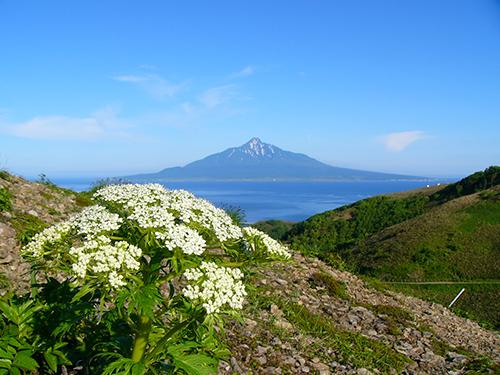 利尻・礼文島への旅
