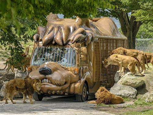 写真提供:「九州自然動物公園アフリカンサファリ」