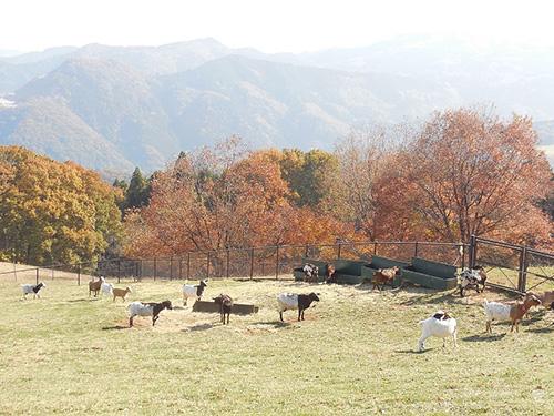 彩の国ふれあい牧場