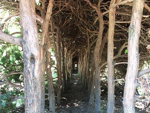 王子の森公園