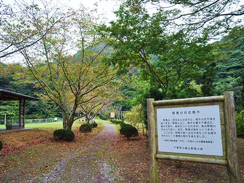 館山野鳥の森