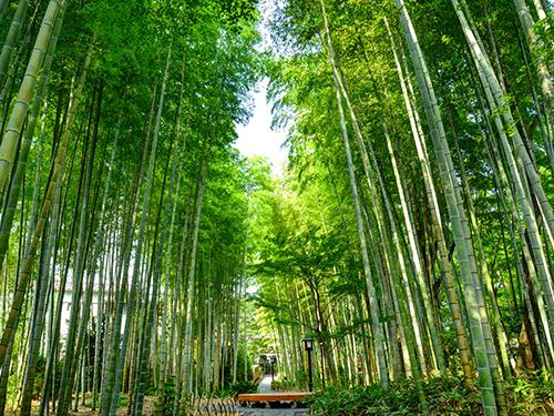 伊豆(静岡県)