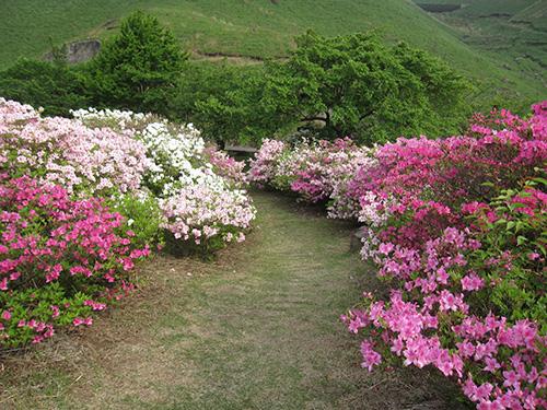 長寿ヶ丘公園