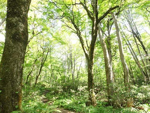 世界遺産の径 ブナ林散策道
